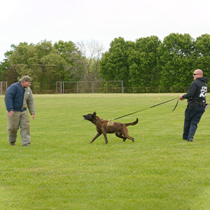 K9 Ripper and handler Cpl/1 Christopher Donaldson, demonstrate K9 procedures and tactics